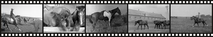 Лабинский конный завод