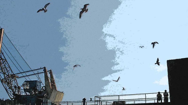 Валаамские чайки