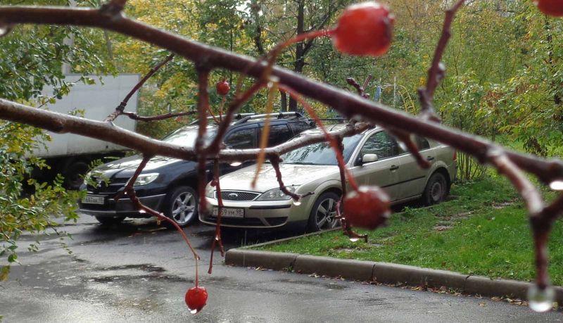 СПб, двор, осень