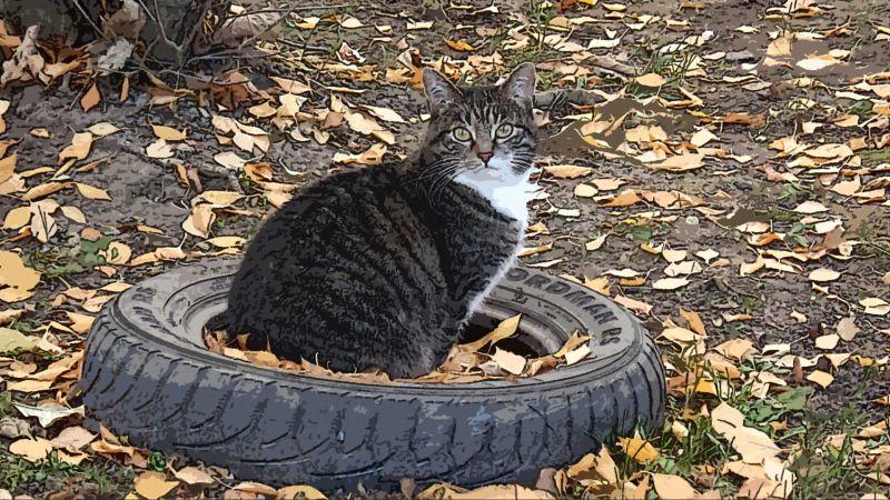 Кошка в колесе