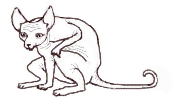 Кот-когтяжист