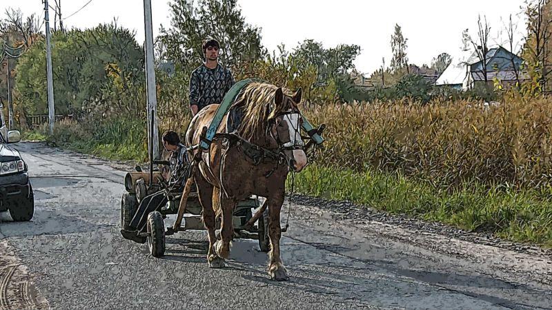 Цыганская лошадь