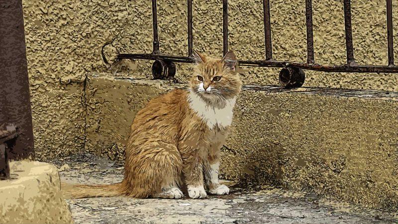 Кошка у дома. СПб.
