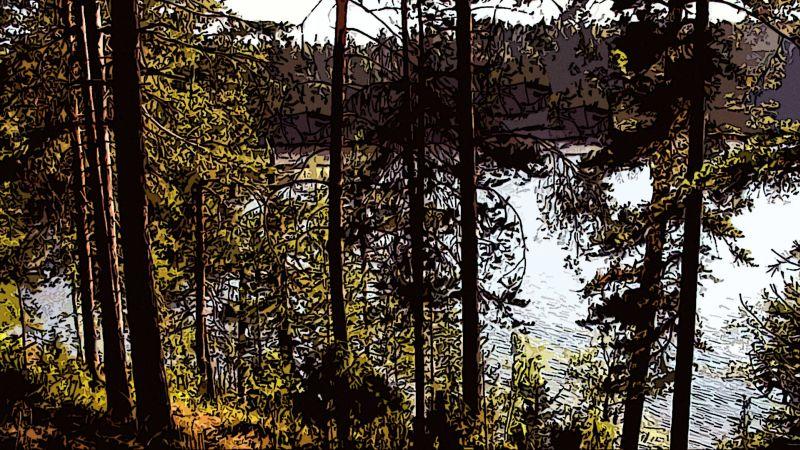 Лес на Ладоге